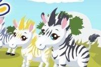 Prenditi cura della zebra 2